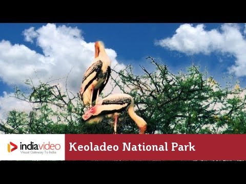 Keoladeo National Park, Rajasthan
