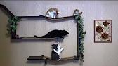 В Одессе появились дома для кошек у моря - YouTube