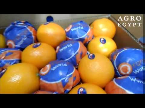 First Valencia Oranges - AgroEgypt - January 2017