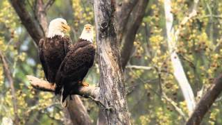 GENERATIONS: Following A Family Of Eagles