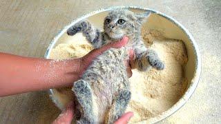 激おこ子猫をきなこ風呂に入れて仲良くなりたい。