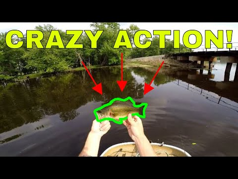 Wisconsin Smallmouth Bass Fishing   Wolf River