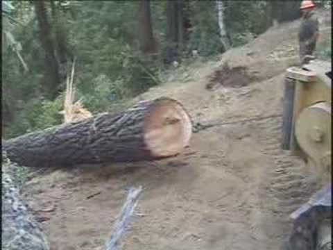 Old Growth Redwood Logging