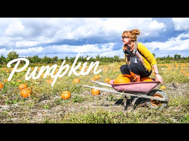 Pumpkin carving | #QUEBEC | 🎥 SONY AX100 4K | GOPRO6 KARMA