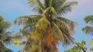 видео Туры в Доминикану в ноябре, отдых в Доминикане по горящей путёвке из Москвы
