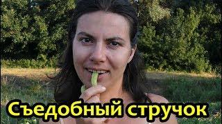 видео Вот такой горох - вкусный и полезный! - EAT-RIGHT.RU