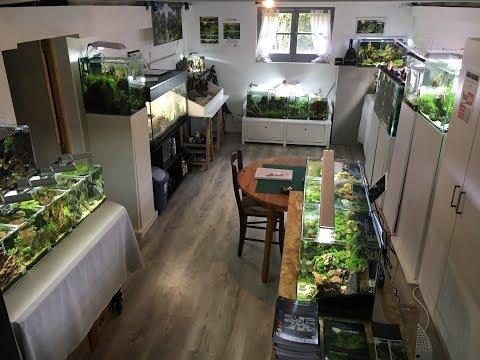 Aquascaping : Visite du showroom d'Aquarilis - 20 aquariums à découvrir