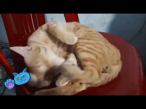 [Z Channel] © My Funny Cat
