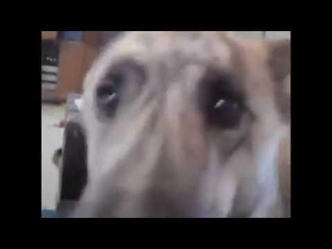 Funny video created by ASHISH GARG RALLA