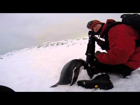 Penguin Encounter - Antarctica