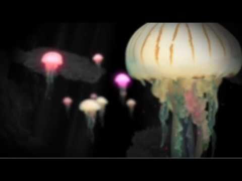 Mathias Kaden feat. Ian Simmonds - Panic Stricken (music video)