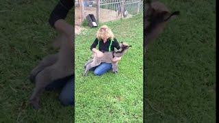 Baby Donkey Craves Cuddles || ViralHog