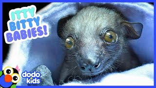 The Tiniest, Most Adorable Baby Animals Ever | 30 Minutes of Animal Videos | Dodo Kids