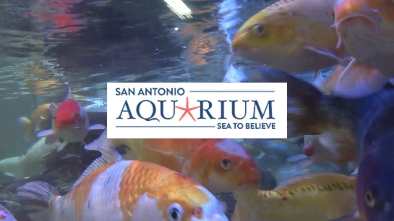 San Antonio Aquarium Sea To Believe Youtube
