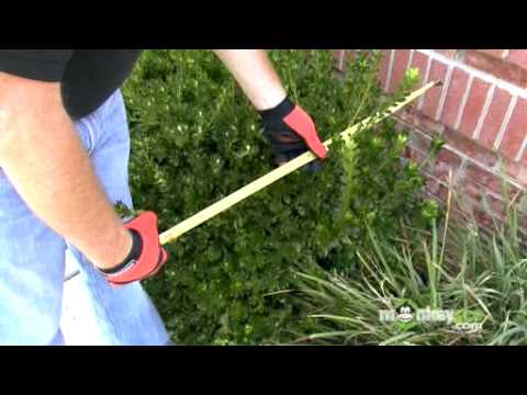 Hedge Trimming - Creating A Guide To Trim
