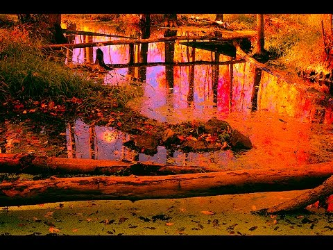 PHOTOGRAPHY TIPS - Creative Creeks And Swamps In Landscape Photography