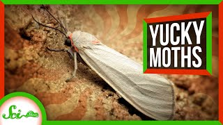 why-these-moths-don-t-run-away-from-bats