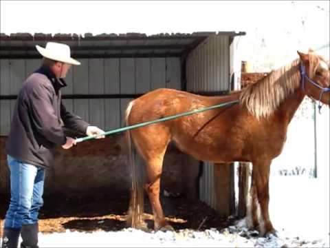 """""""Shiloh""""  1st Touch, 5 yo BLM Mustang , Sean Davies, ColoradoReinsman"""