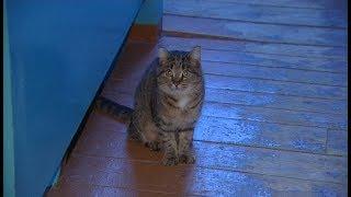 полосатая кошка ищет дом