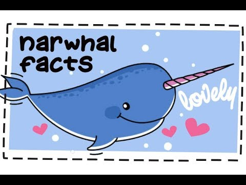 20 Fun Facts About Narwhals 🐋