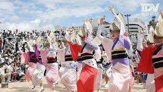 徳島市の阿波踊り開幕を夜に控えた12日午前、市中心部で阿波おどり振...