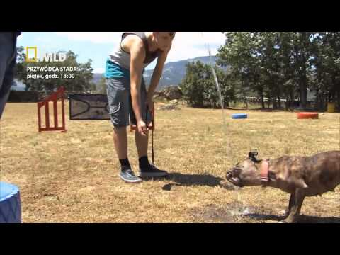 Przywódca stada: Nowe życie Rosie