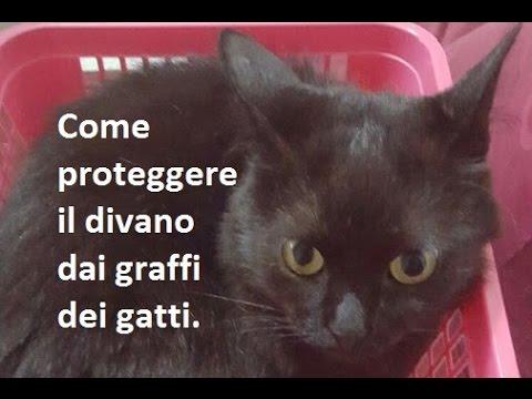 Gatto Divano Pelle.Come Proteggere Il Divano Dai Graffi Dei Gatti