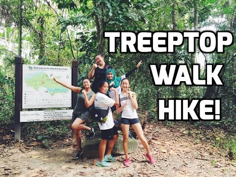 MACRITCHIE TREETOP WALK HIKE!