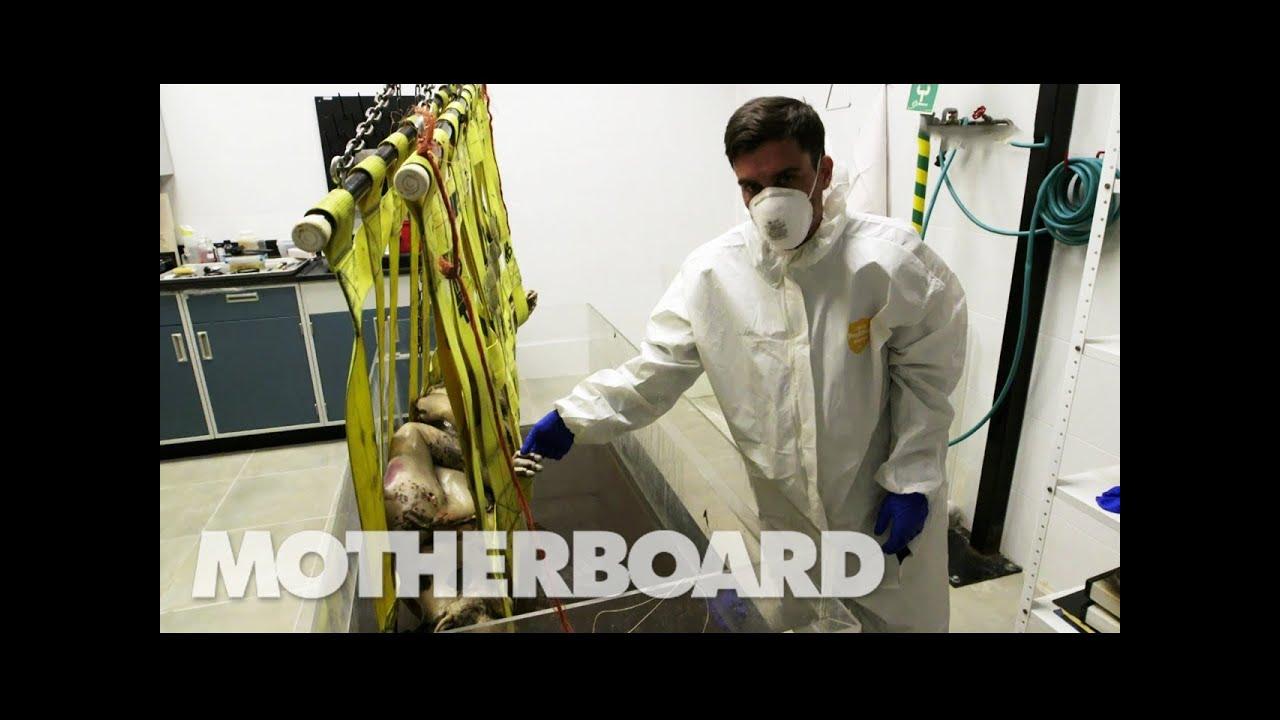 死体を使った人体実験!腐った肢体を液体の中に入れ…