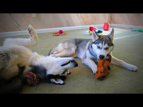 Funny Pets 😹🐶Funny Pets Doing Funny Things (Part 1) [Funny Pets]