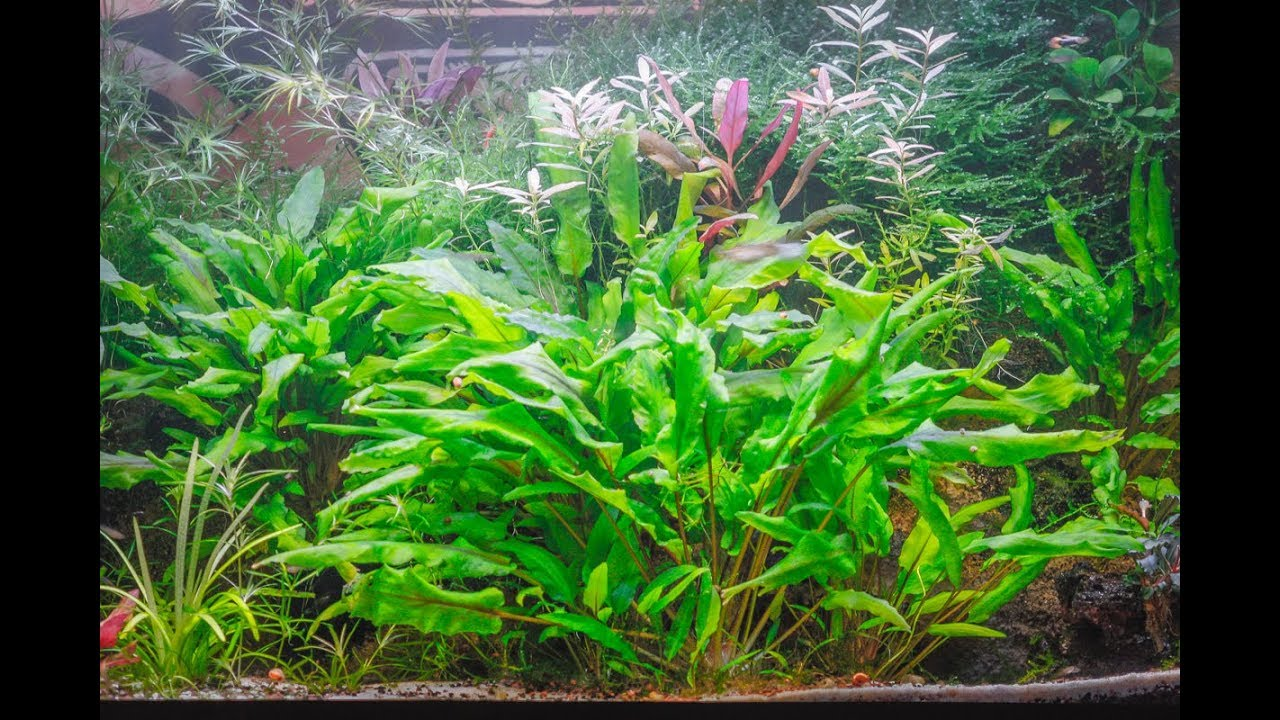Fabriquer Eclairage Led Aquarium Rampe Led Aquarium Maison | Ventana Blog