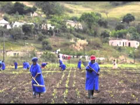 Food security in Africa - Feed the people