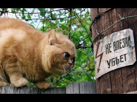 Новые видео приколы про кошек