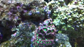 My 125 Reef
