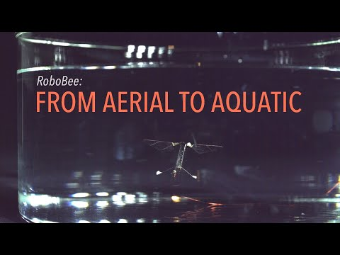 RoboBee: From Aerial To Aquatic