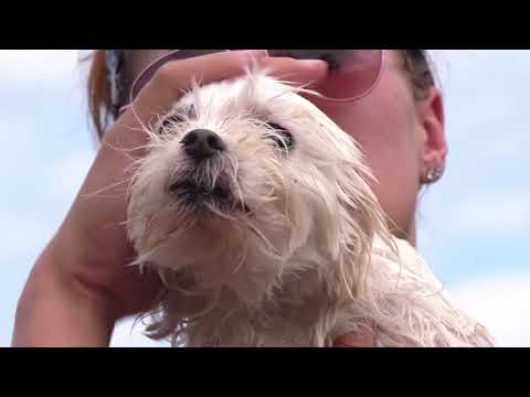 Amazing Footage of Humane Society of Missouri Disaster Team Rescue Dog from North Carolina