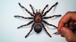 Comment dessiner une araignée [Tutoriel]