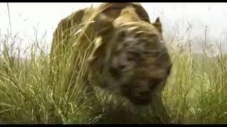 Книга джунглей 2016 трейлер на русском