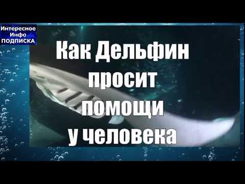 видео: Дельфин просит о помощи