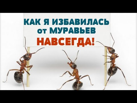 МНЕ ПОМОГ ТОЛЬКО ЭТОТ СПОСОБ! Как избавиться от рыжих муравьев НАВСЕГДА!