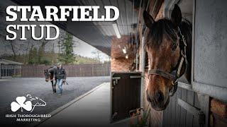 ITM Irish Stallion Showcase 2021 - Starfield Stud
