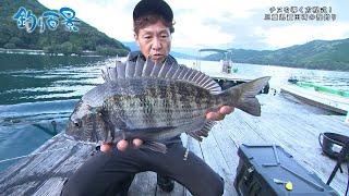 【釣り百景】#357 チヌを導く方程式!三重県賀田湾の筏釣り