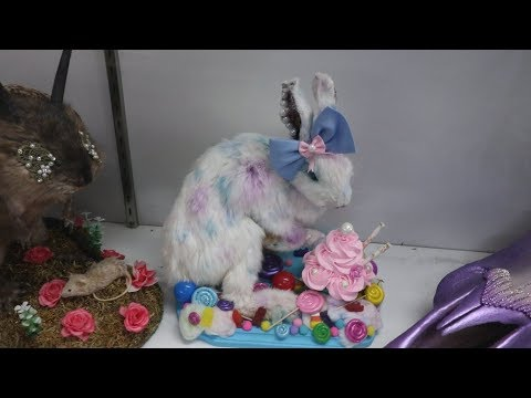 Murder, Bones and the Taxidermied Easter Bunny - Las Vegas Oddities & Antiques