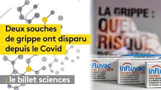 Deux souches de grippe ont disparu depuis le Covid-19 - franceinfo