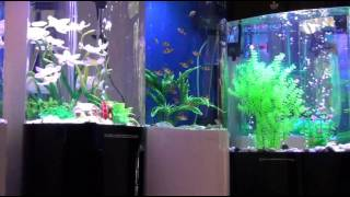 Cleair Aquatics - Acrylic & Glass Aquariums
