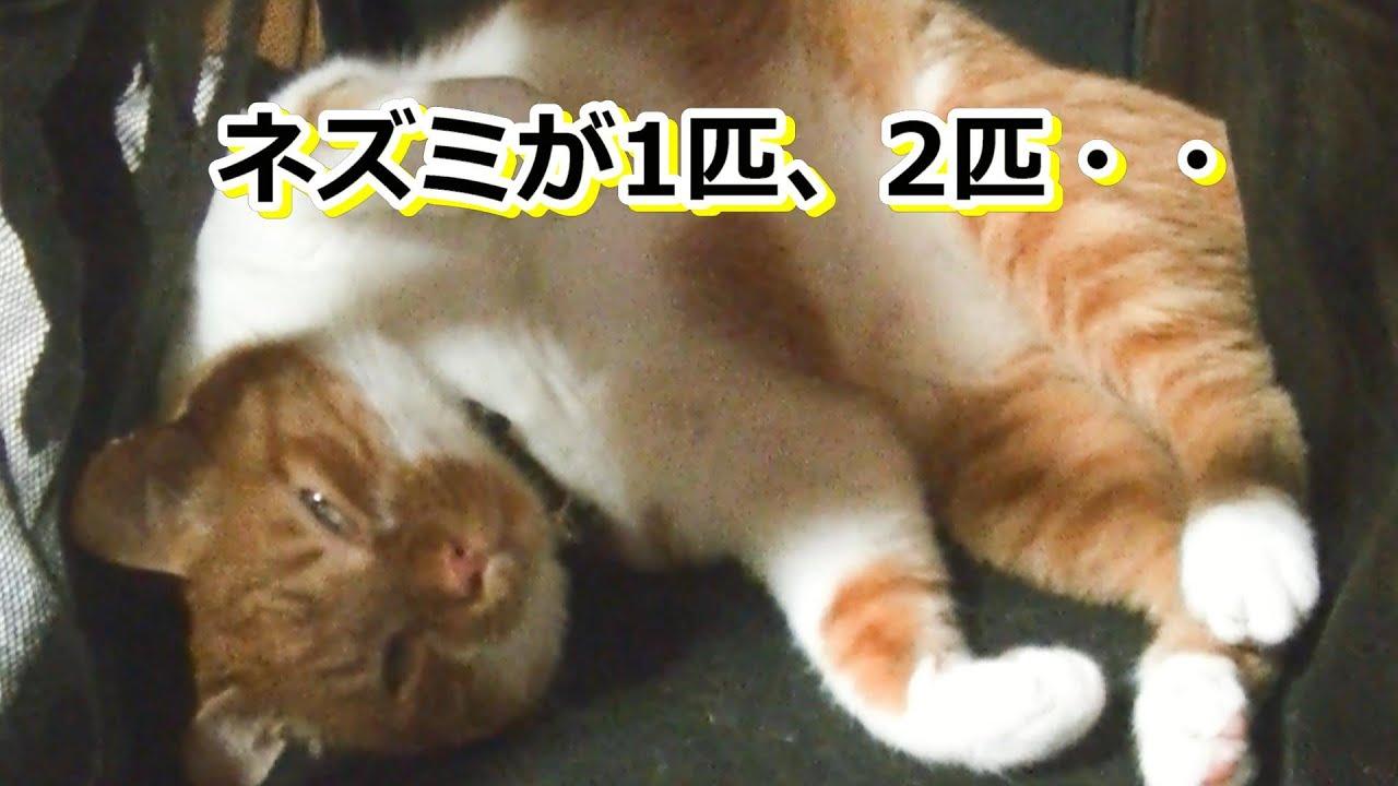 眠たくな~れ【侵入した野良仔猫】~家猫修行中~