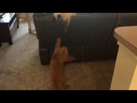 Puppy Trying to Play with Siamese Cat