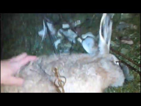 Как поймать зайца летом на даче видео