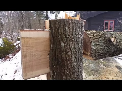 Tongue And Groove Tree Felling Technique