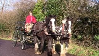 How To Hitch Up A 4-wheel Horse Carriage (– Flora's First Trip!)